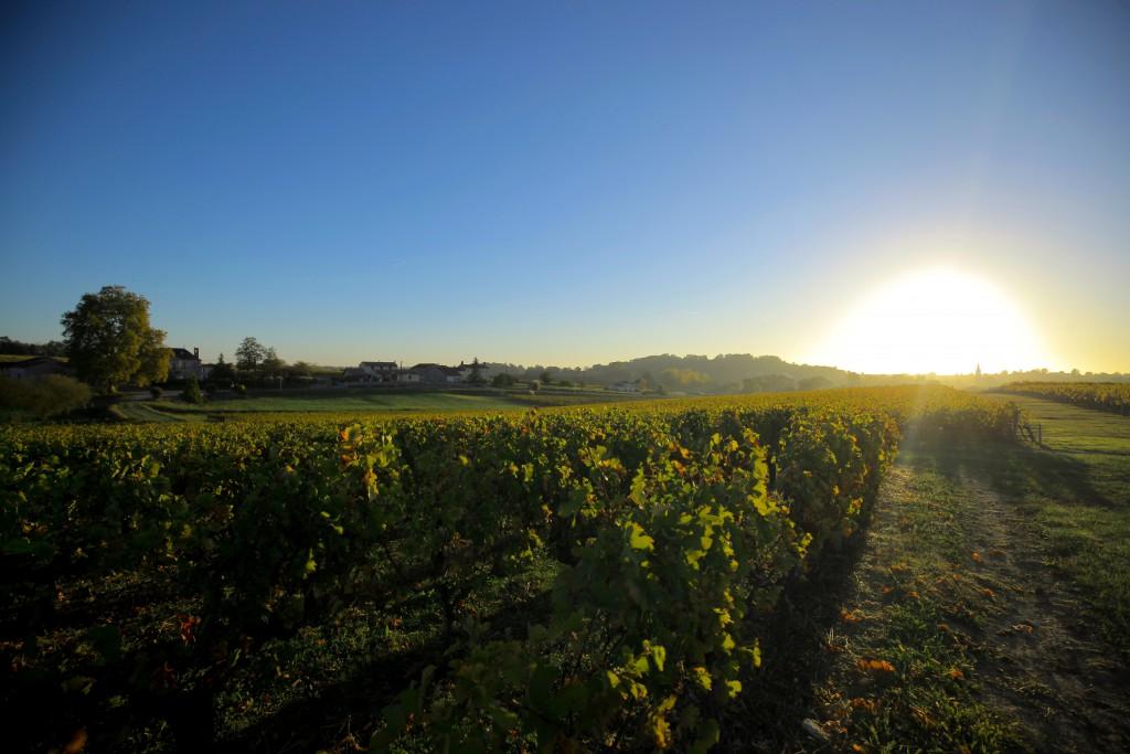 vigne-cote_de_bourg